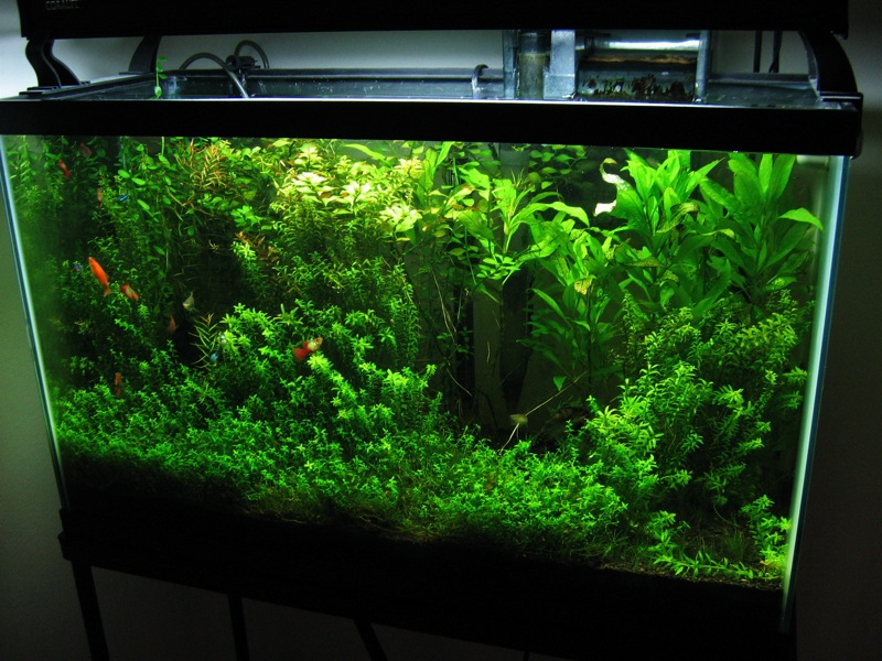Planted Aquarium Photo by: Nat Tarbox