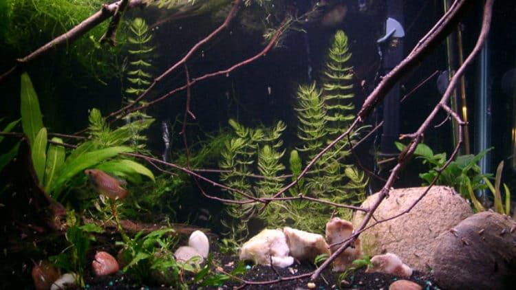 Cooling Summer Aquariums