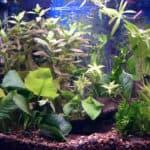 My New Betta Fish is Skittish