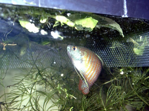 Reduce filter current for your betta fish care for Fish tank care