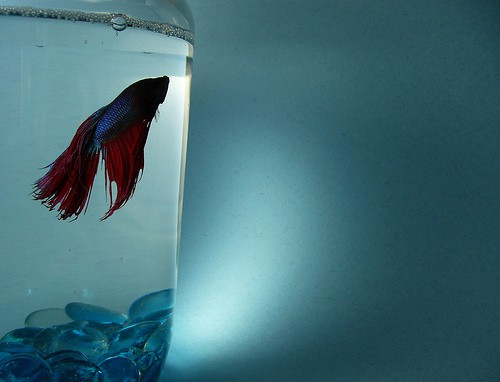 how to prepare fish tank after velvet diseses