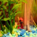 Selecting Aquarium Substrate