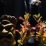 Betta Tail Injured by Aquarium Net