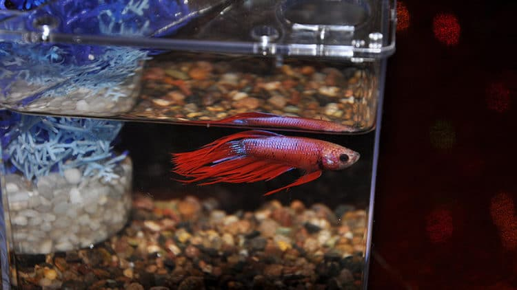 A Warning About Preventative Medicine & Aquarium Fish