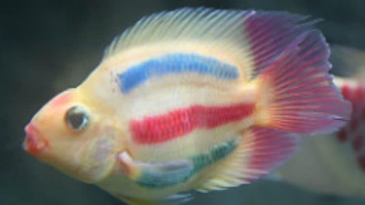 Painted Fish: Animal Cruelty