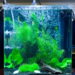 Reduce Filter Current for your Betta