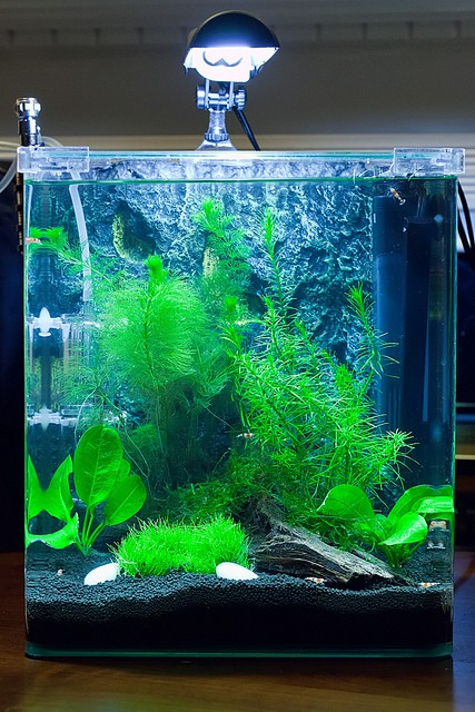 reduce filter current for your betta | fish care