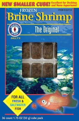 How To Feed Frozen Brine Shrimp To Your Betta Fish Fish Care