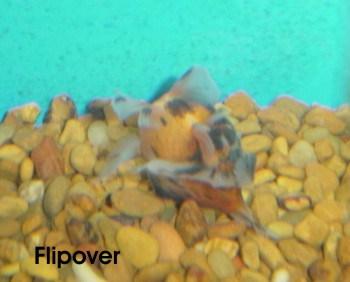 Flipover