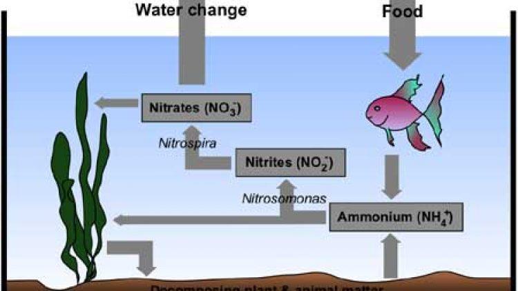 Ammonia, Nitrates & Nitrites OH MY