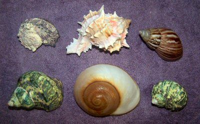 Brevis Shells Top