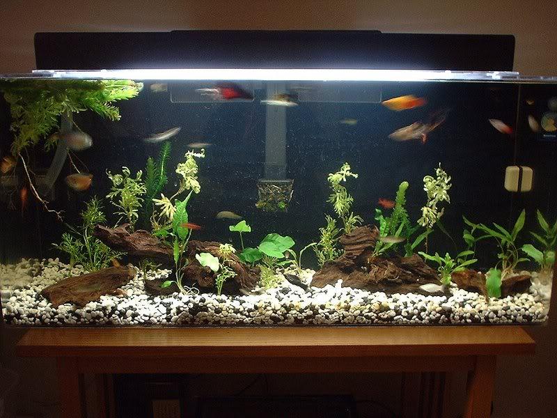 Building A Betta Friendly Community Tank Fish Care
