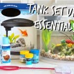 Check List for Setting up a Fish Tank