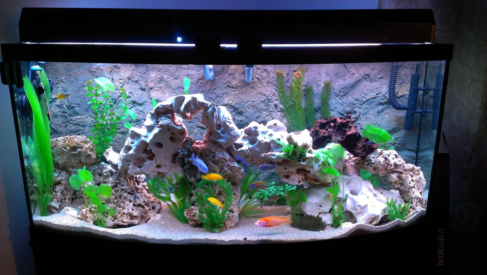What can go in my betta 39 s water fish care for African cichlid tank decoration