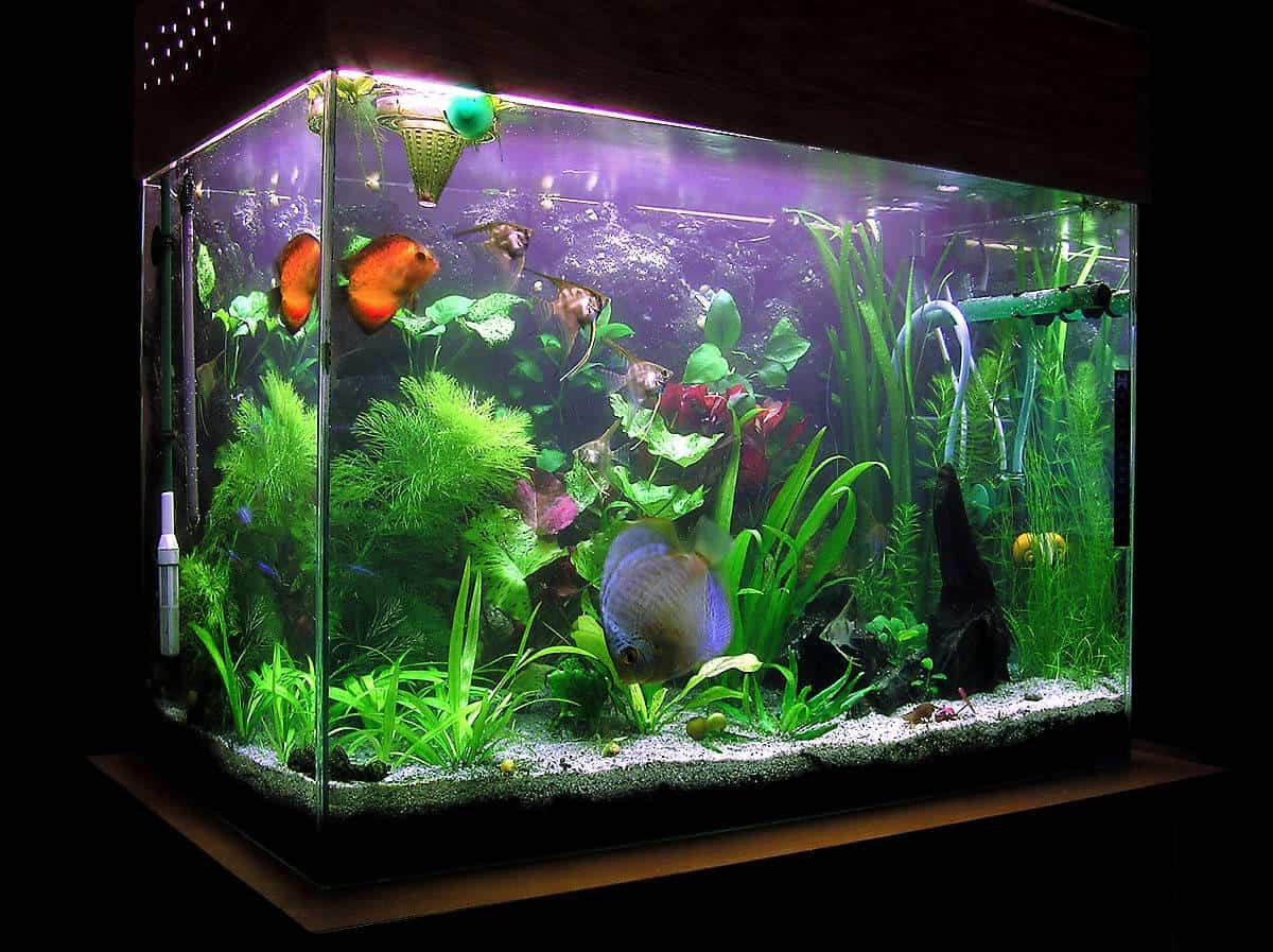 Fish tank used - Fish Tank Used
