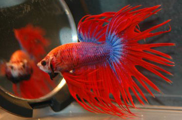 Top 12 betta fish toys fish care for Toys for betta fish