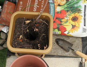 pot-plant-burial