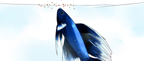 feeding-betta-fish