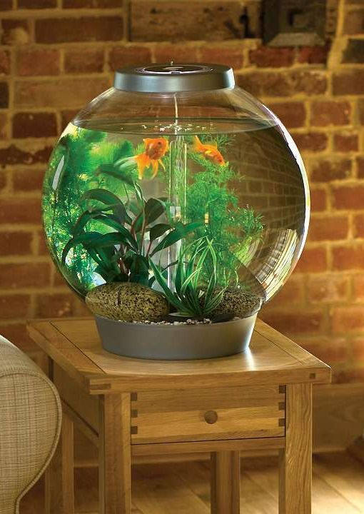 Nitrogen cycle fish care for What do you need for a fish tank