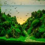 How To Setup an Aquatic Plant Environment For Your Betta