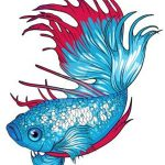 betta-fish-clipart
