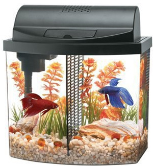the cost of setting up and caring for a betta fish fish care