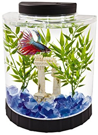glass-gravel-betta-tank