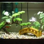 10-gallon-fish-tank