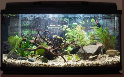 20-gallon-fish-tank