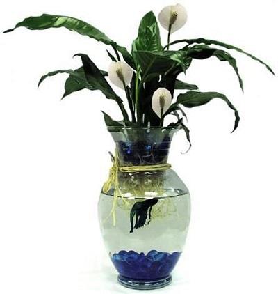 Betta-Fish-Vase