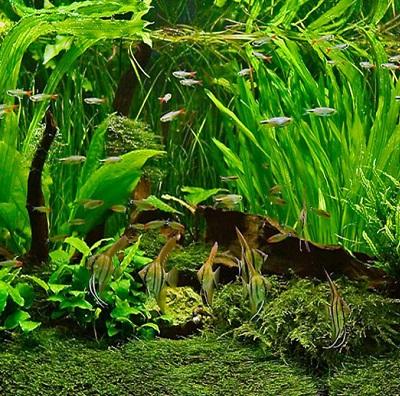 aquarium-plants