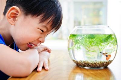 betta-fish-aquarium-condition