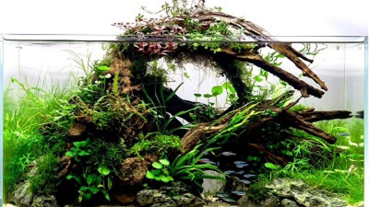 Aquarium Wood A Complete Guide To Preparing And Installing Driftwood Fish Care