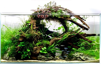 Driftwood-Aquascape