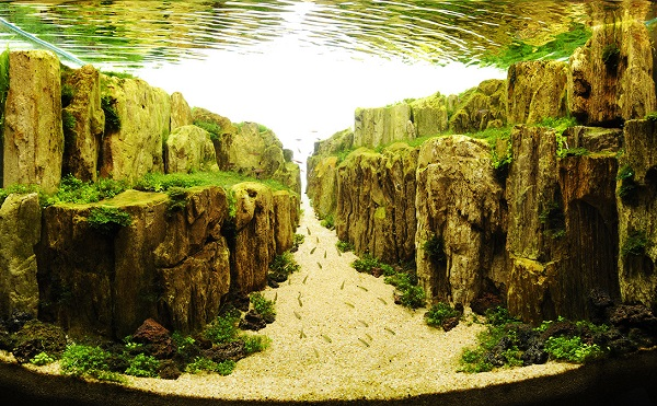 aquascaping-designs