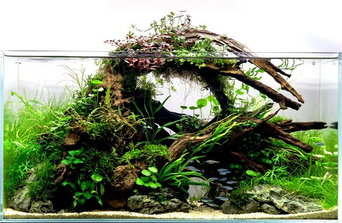 aquascaping-with-variety