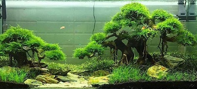 driftwood-aquascaping