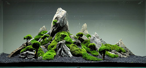 mountain-design- aquascape