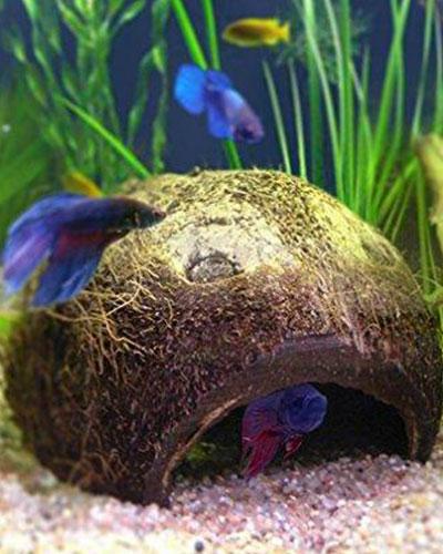 betta-fish-home