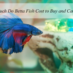 how-much-do-betta-fish-cost