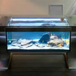 title-image-aquarium-coffee-table