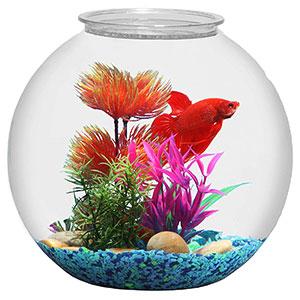 3-Gallon-Fish-Bowl