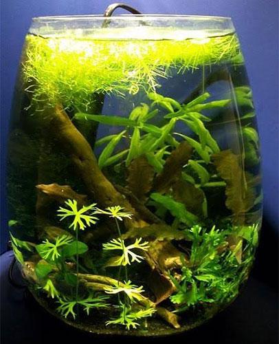 3 Gallon Fish Tank For Betta Fish Care