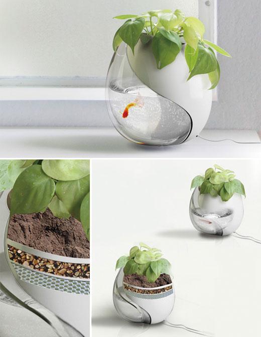 Tanks with plants Cool Betta Fish Tank Ideas