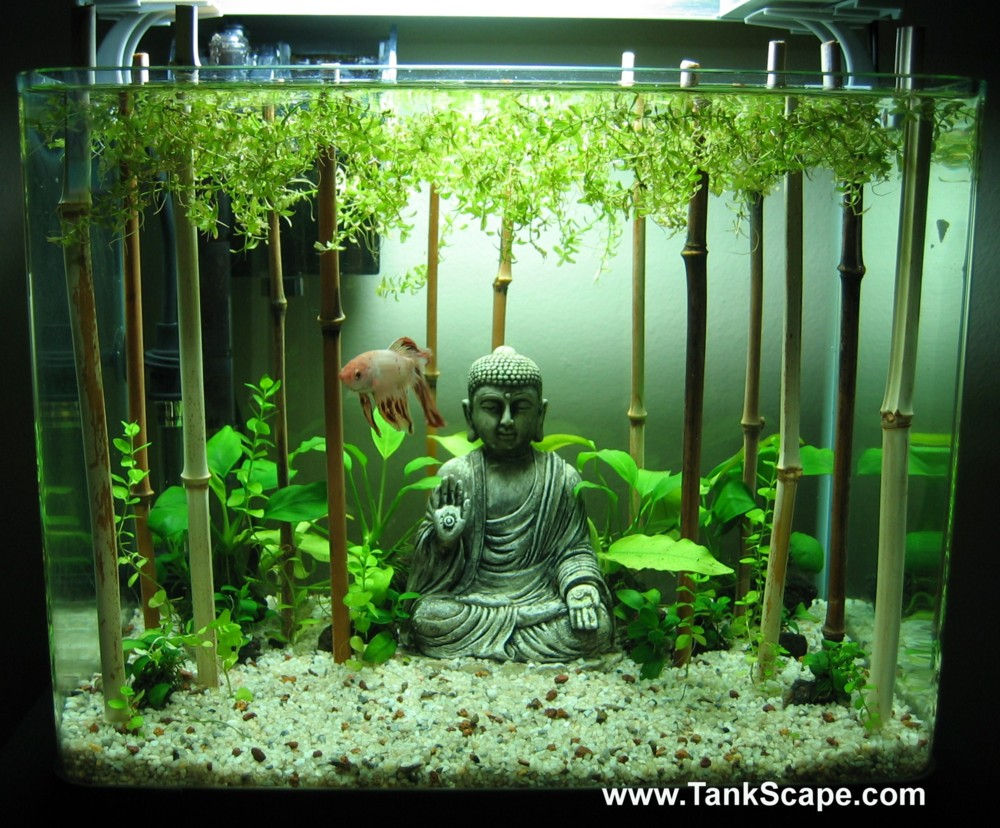 Cool Betta Fish Tank Ideas Buddha tank with bamboo