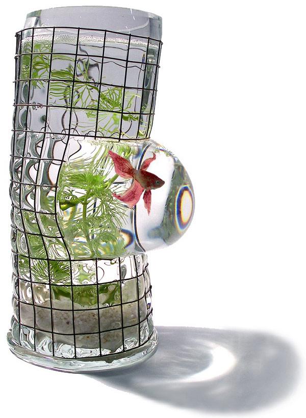 Cool Betta Fish Tank Ideas Vanessa Mitrani Glass Tank